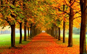 tumblr_static_autumn_leaves_on_road-2560x1600_27c121e26d78786c700ab50d214f2706